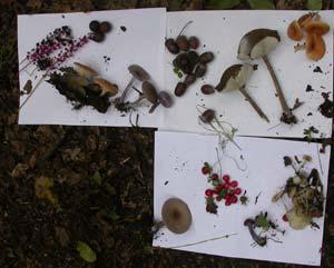 Cerchiamo insieme cosa potremmo mangiare...bacche, ghiande, funghi