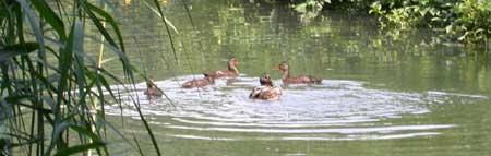 Le scuole in visita al parco for Stagno per tartarughe