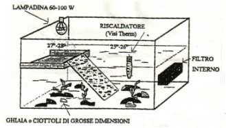 Le nozioni indispensabili for Filtro acqua tartarughe